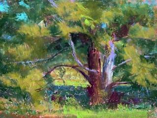 Judy Pardue Memorial Landscape Award: